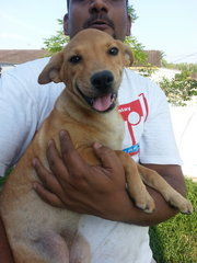 Tikky In Kulim - Mixed Breed Dog