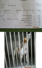 1st Immiticide injection - vet bill: RM180.20
