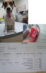 Spayed - vet bill: 402.80