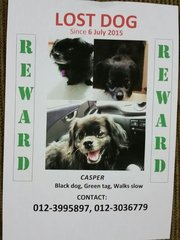 Casper Lost, In Tmn Melati - Pekingese Dog
