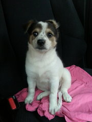 Lucky Angel - Mixed Breed Dog