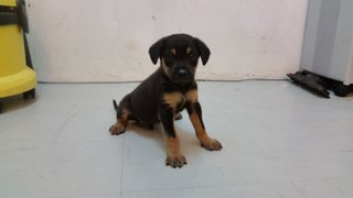 Puppy 3 - Mixed Breed Dog