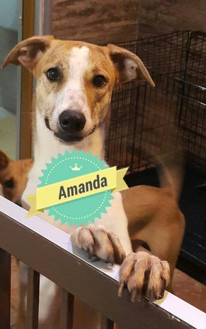 Man @ Amanda - Mixed Breed Dog