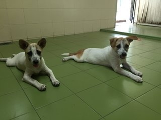 2 Sisters - Terrier Mix Dog