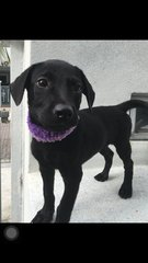 Little Blacky - Mixed Breed Dog