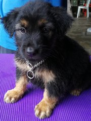 Terrier Crossed Breed - Terrier Mix Dog