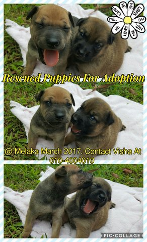 Mixed Breed Puppies Adopted 1 Year 11 Months Fat Puppies From