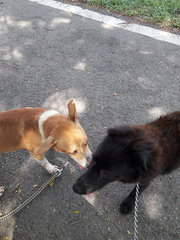 No issues with other dogs - seen here with Negrito