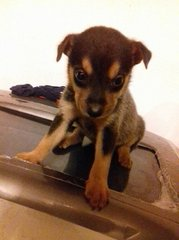 Puppy ( Adopted ) - Mixed Breed Dog