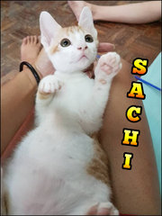 Sachi, means from the sun (adopted)