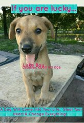 In The Name Of Development - Mixed Breed Dog