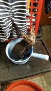 Charlie decided to sail away in a pail after his first bath