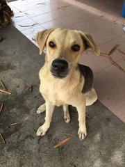 Lovely Male Dogs For Adoption  - Mixed Breed Dog