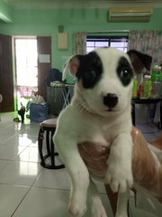 Doggie R8 - Mixed Breed Dog