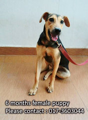 6 Months Female Puppy - Mixed Breed Dog