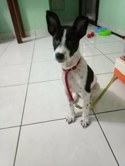 Doggie R13 - Mixed Breed Dog