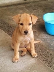 Apr Female _3 - Mixed Breed Dog