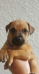 Yasmin - Mixed Breed Dog