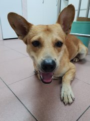 Bengy - Mixed Breed Dog