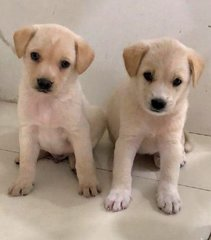 Puppies For Adoption - Mixed Breed Dog
