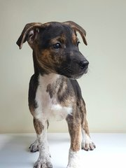 Basil - Mixed Breed Dog