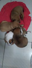 4 Little Puppies - Mixed Breed Dog