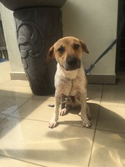 Macan - Mixed Breed Dog