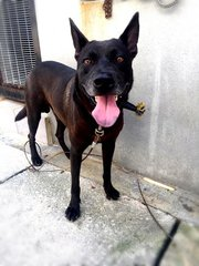 Blackie - Mixed Breed Dog