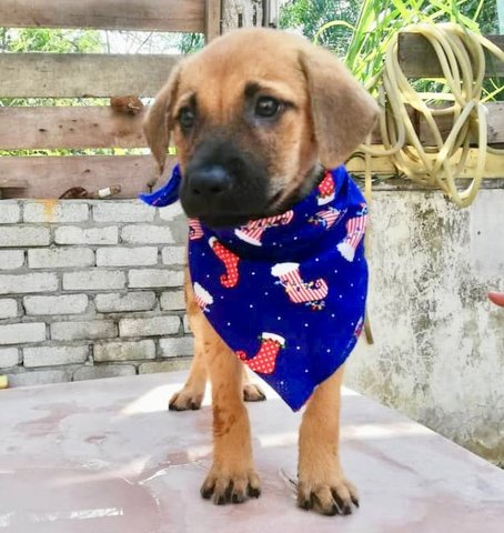 6 Cute Puppies For Adoption  - Mixed Breed Dog