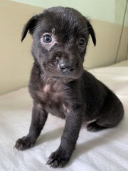 Are You Ready For Some Cuteness! - Mixed Breed Dog