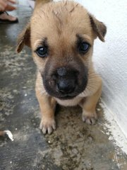 Bola/Sushi - Mixed Breed Dog