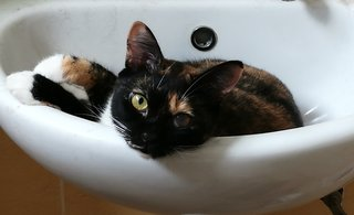 Just chilling in the sink.....