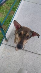 Chihya - Mixed Breed Dog