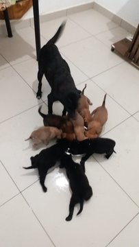 8 Pups - Mixed Breed Dog