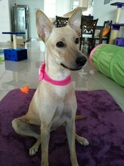 Pinkie - Mixed Breed Dog