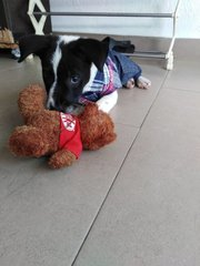 Oreo - Mixed Breed Dog