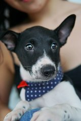 Puppies For Adoption! - Mixed Breed Dog