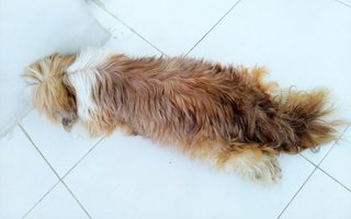 Grace sleeping