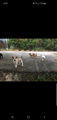 5 Little Cute Musketeers  - Mixed Breed Dog