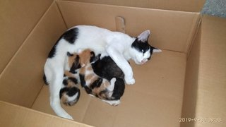 Mama cat and 4 babies