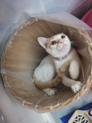 Honey: I only like sitting in a clean basket!