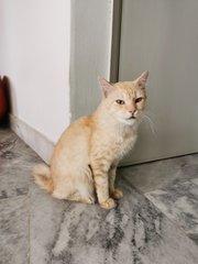 Bagi Whiskas Junior Pada Kucing Petfinder My