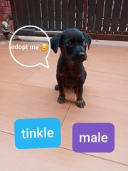Tinkle  - Mixed Breed Dog